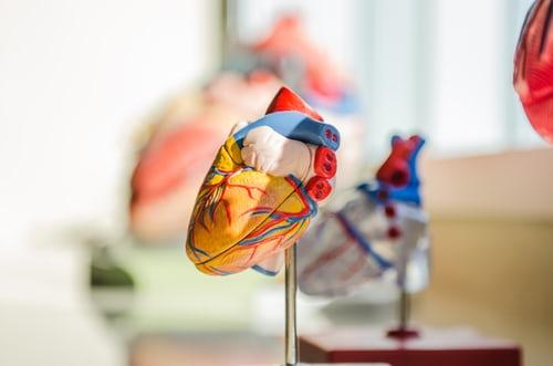 srdce, lidské srdce, umělé srdce, transplantace srdce